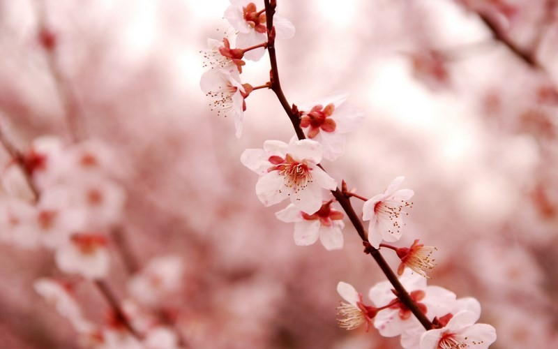 Photos-of-Sakura-vinegret (15)