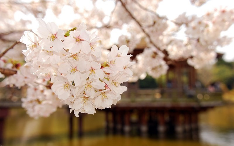 Photos-of-Sakura-vinegret (16)