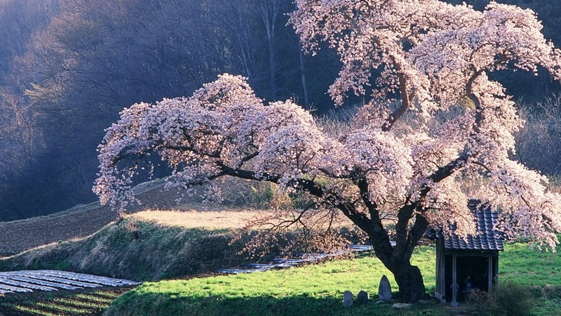 Photos-of-Sakura-vinegret (28)