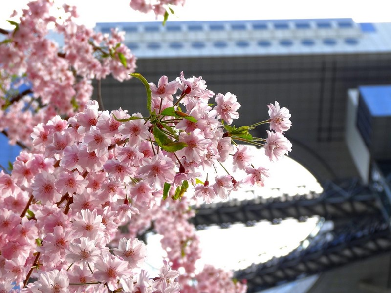 Photos-of-Sakura-vinegret (4)