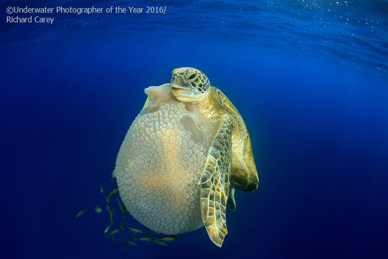 Underwater Photographer of the Year 2016 | vinegred.ru