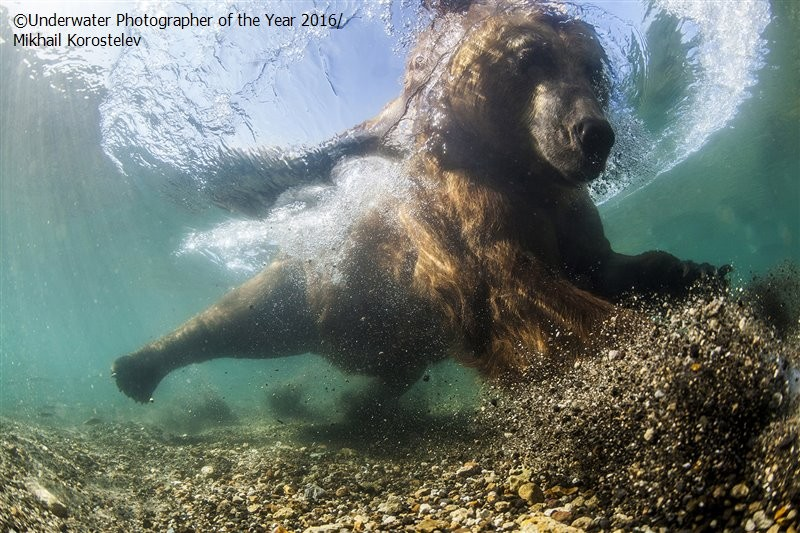 Underwater Photographer of the Year 2016_vinegret (5)