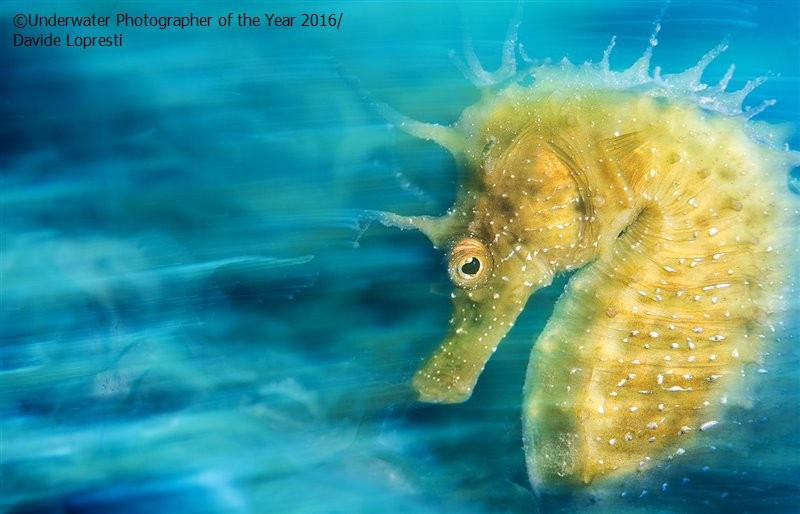 Underwater Photographer of the Year 2016_vinegret (9)