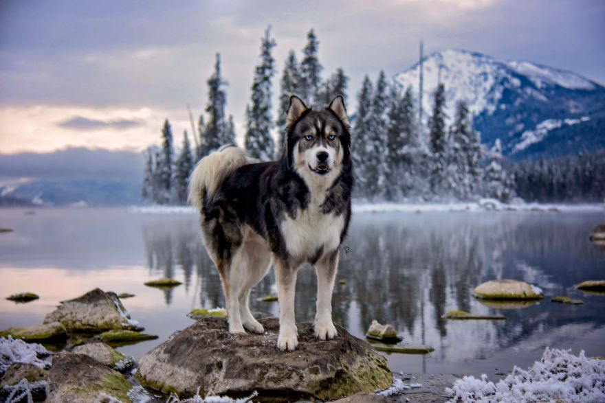 i-rescued-a-husky-and-later-he-saved-me-from-an-abusive-relationship__vinegret (20)