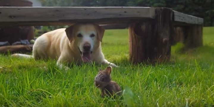 Nice-meeting-a-dog-and-a-Bunny-vinegret (3)