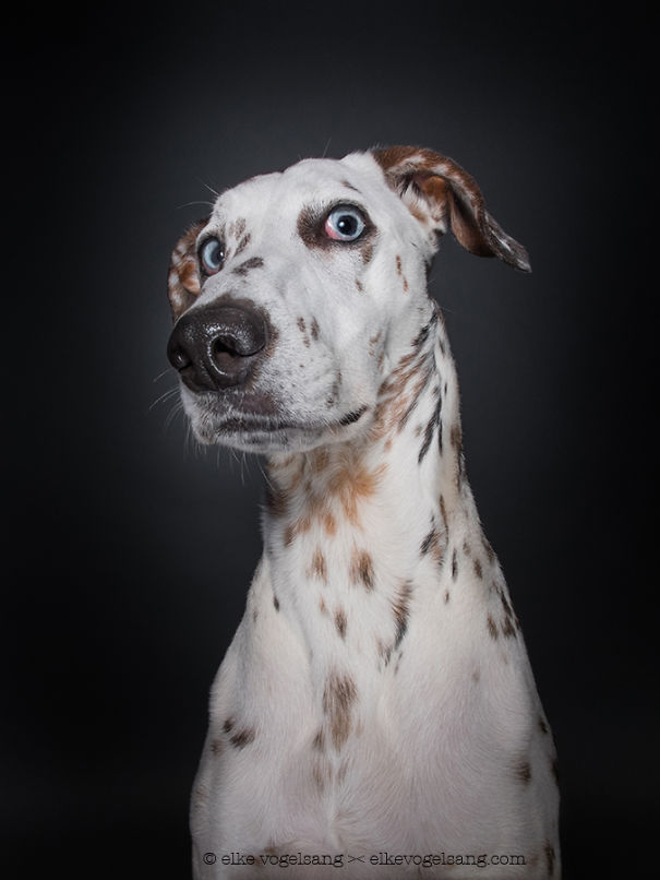 dogs-questioning-the-photographers-sanity_vinegret (1)
