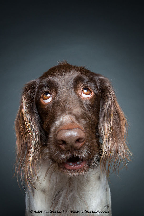 dogs-questioning-the-photographers-sanity_vinegret (10)