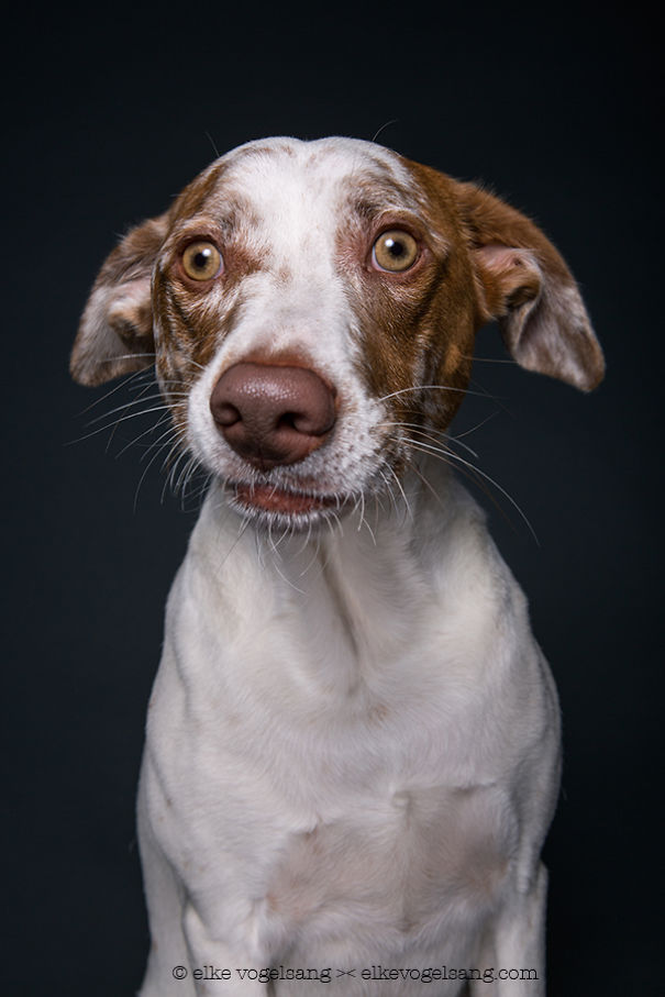 dogs-questioning-the-photographers-sanity_vinegret (3)