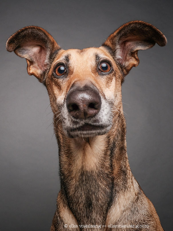 dogs-questioning-the-photographers-sanity_vinegret (5)