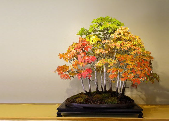 amazing-bonsai-trees-vinegret (11)