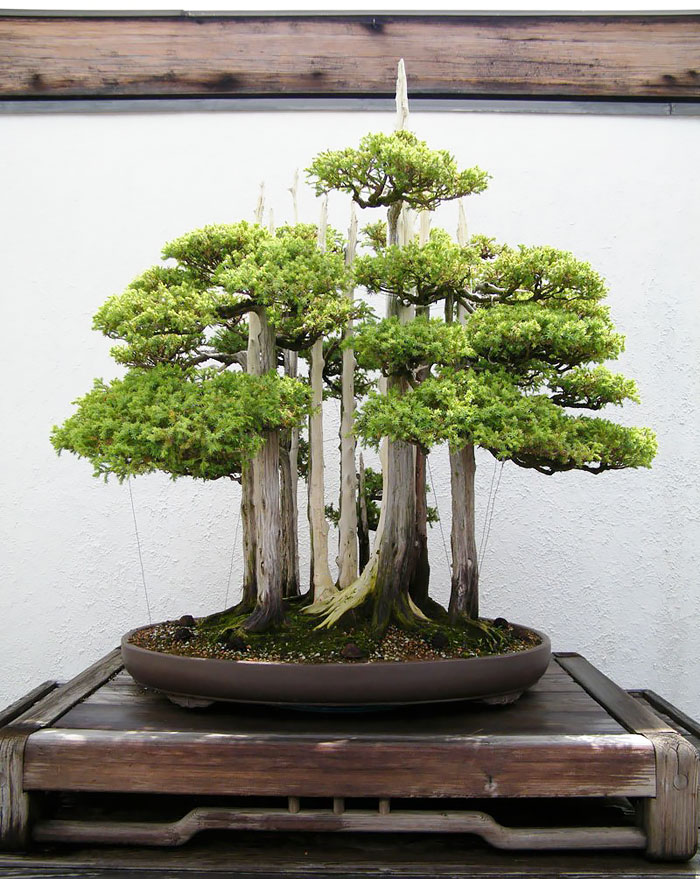 amazing-bonsai-trees-vinegret (13)