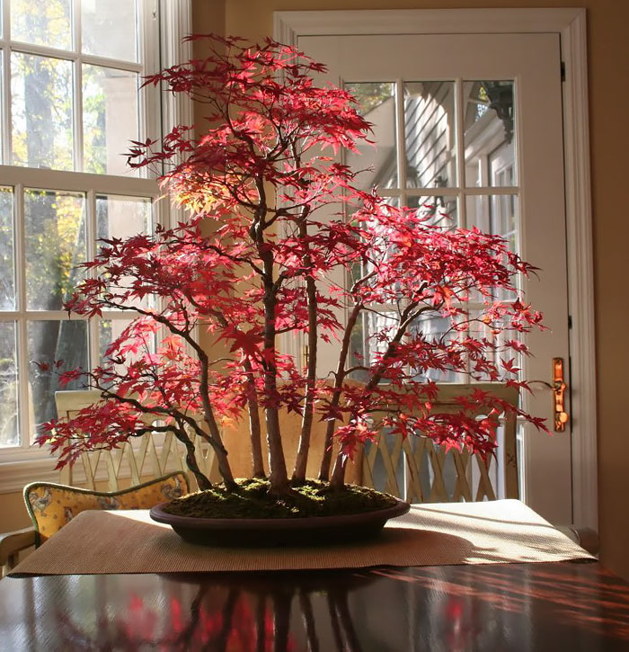amazing-bonsai-trees-vinegret (14)