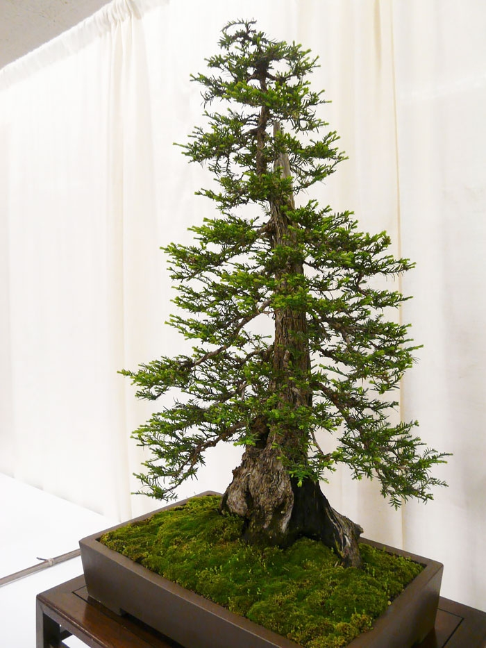 amazing-bonsai-trees-vinegret (17)