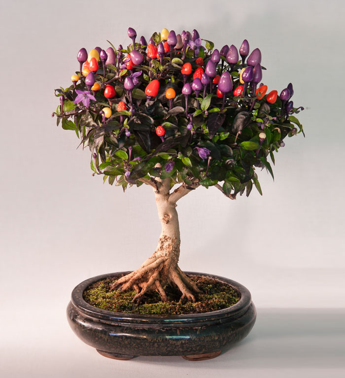 amazing-bonsai-trees-vinegret (19)
