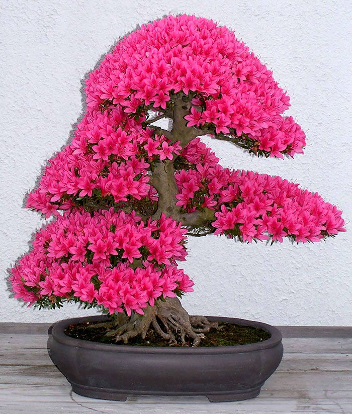 amazing-bonsai-trees-vinegret (2)