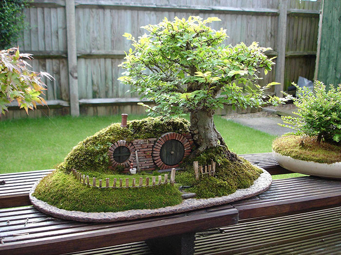 amazing-bonsai-trees-vinegret (20)