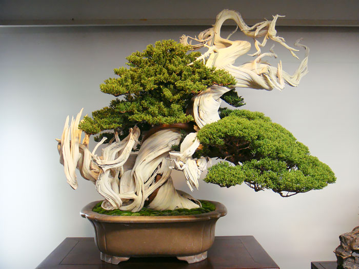 amazing-bonsai-trees-vinegret (23)