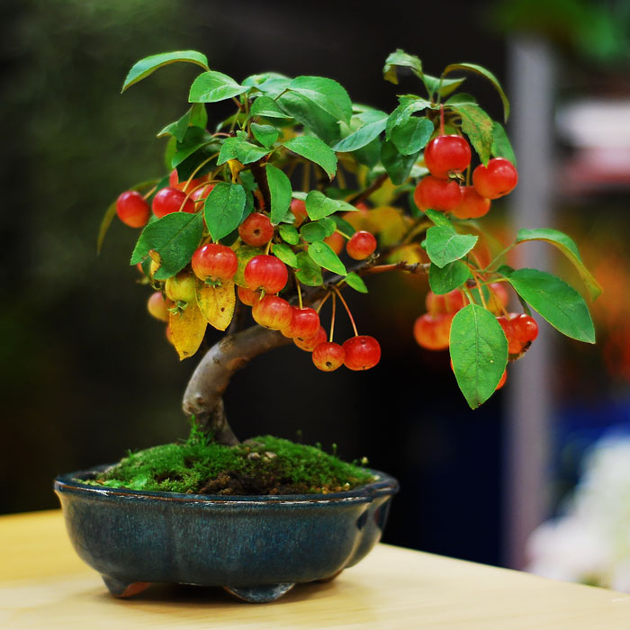 amazing-bonsai-trees-vinegret (8)