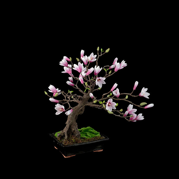 amazing-bonsai-trees-vinegret (9)
