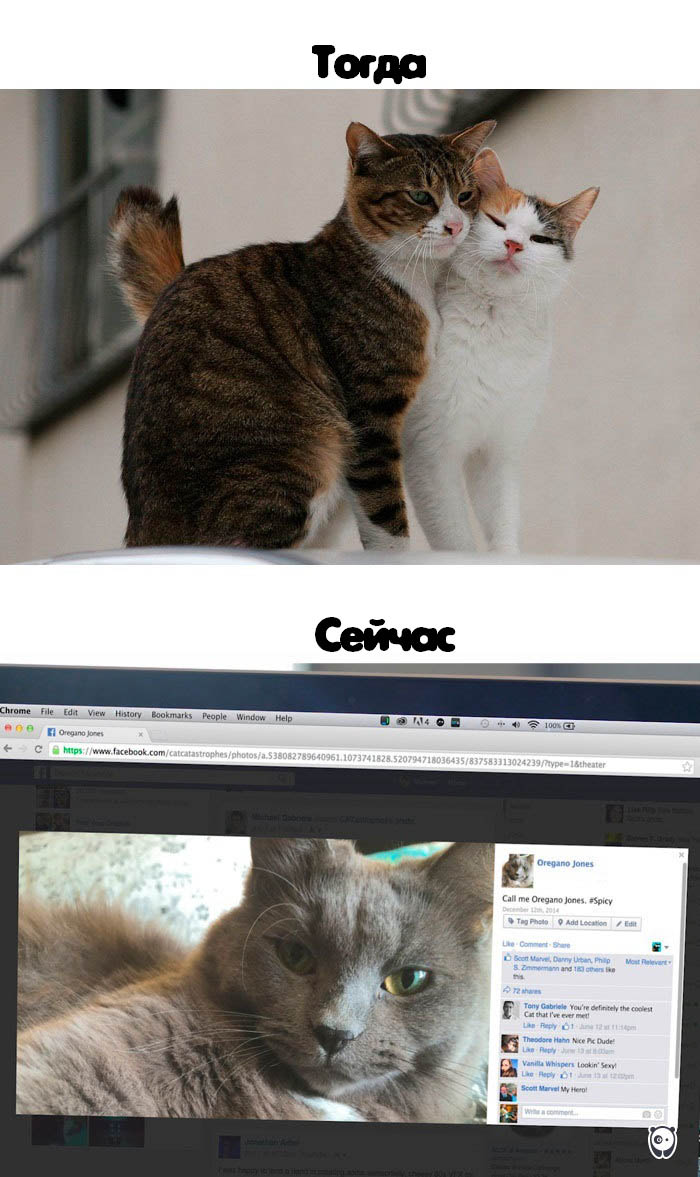 cats-then-now-funny-technology-change-life-vinegret (12)