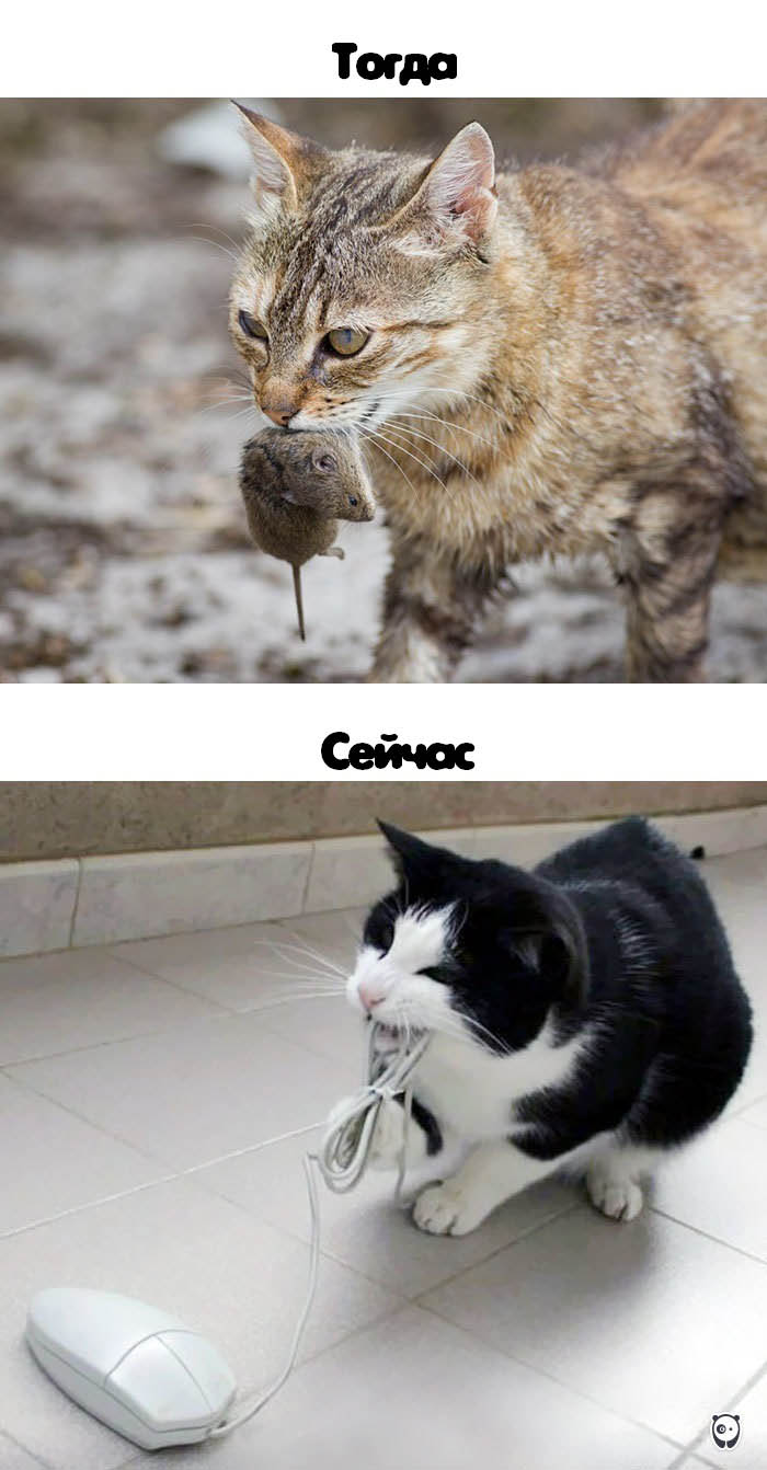 cats-then-now-funny-technology-change-life-vinegret (13)