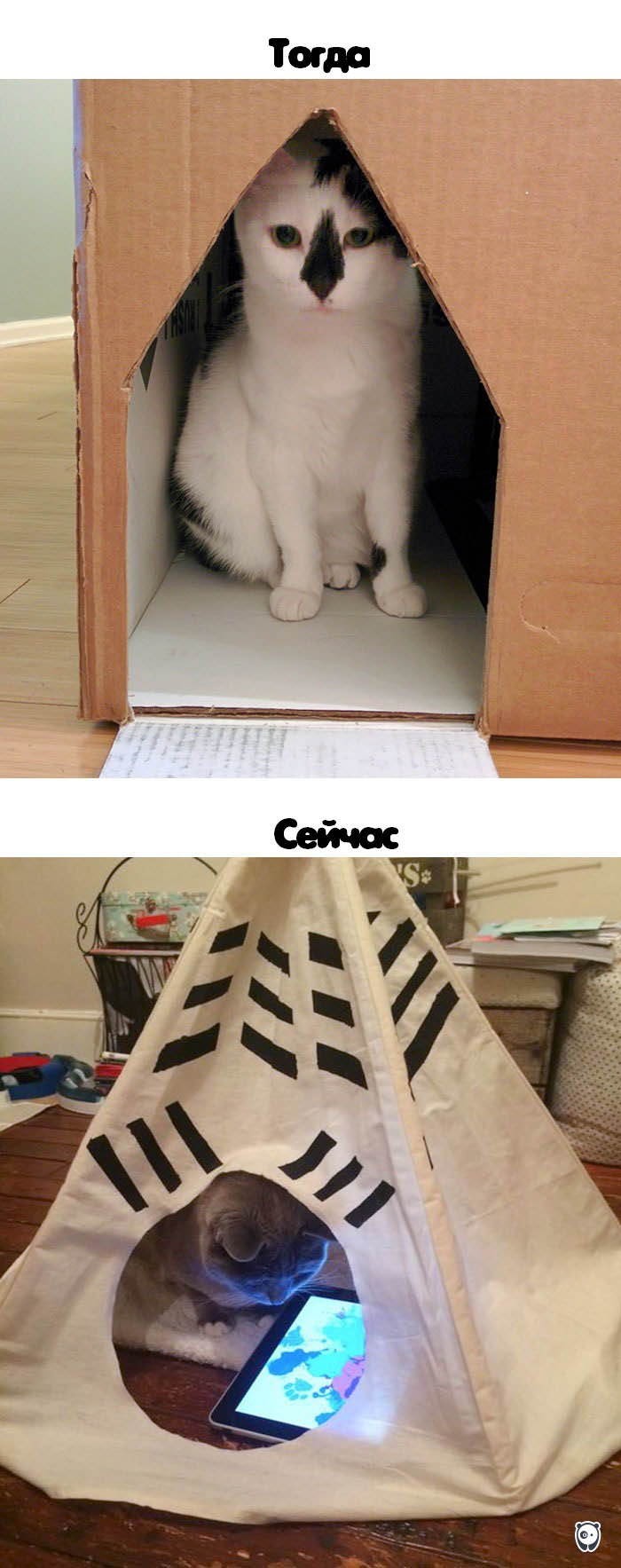 cats-then-now-funny-technology-change-life-vinegret (14)