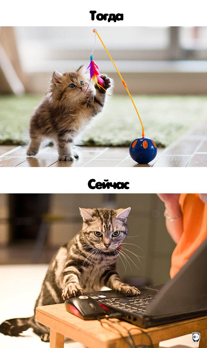 cats-then-now-funny-technology-change-life-vinegret (3)