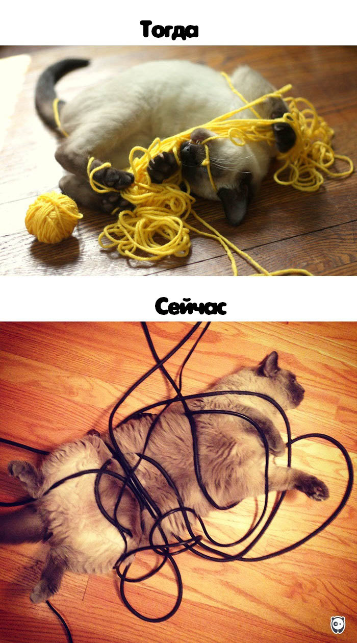 cats-then-now-funny-technology-change-life-vinegret (4)