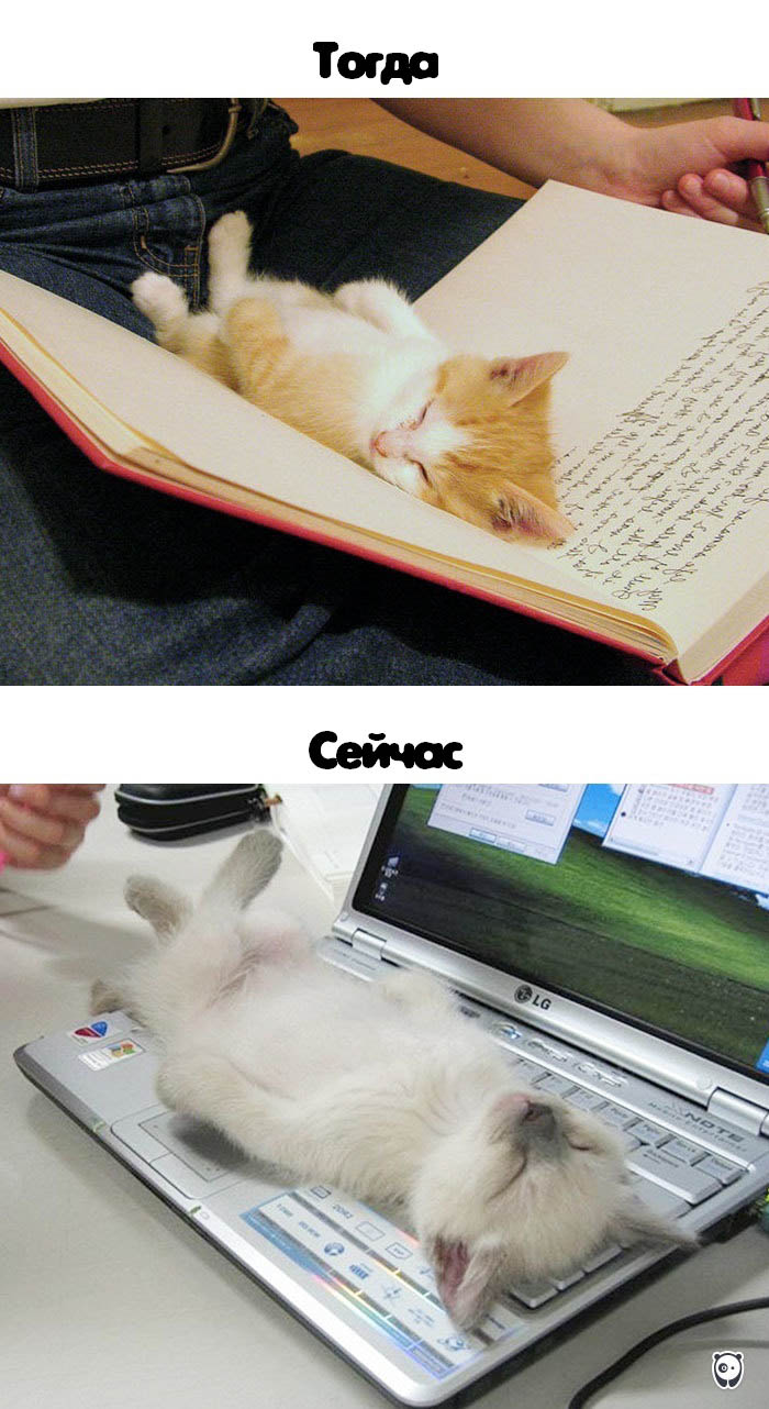 cats-then-now-funny-technology-change-life-vinegret (5)