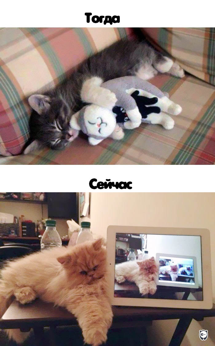 cats-then-now-funny-technology-change-life-vinegret (8)