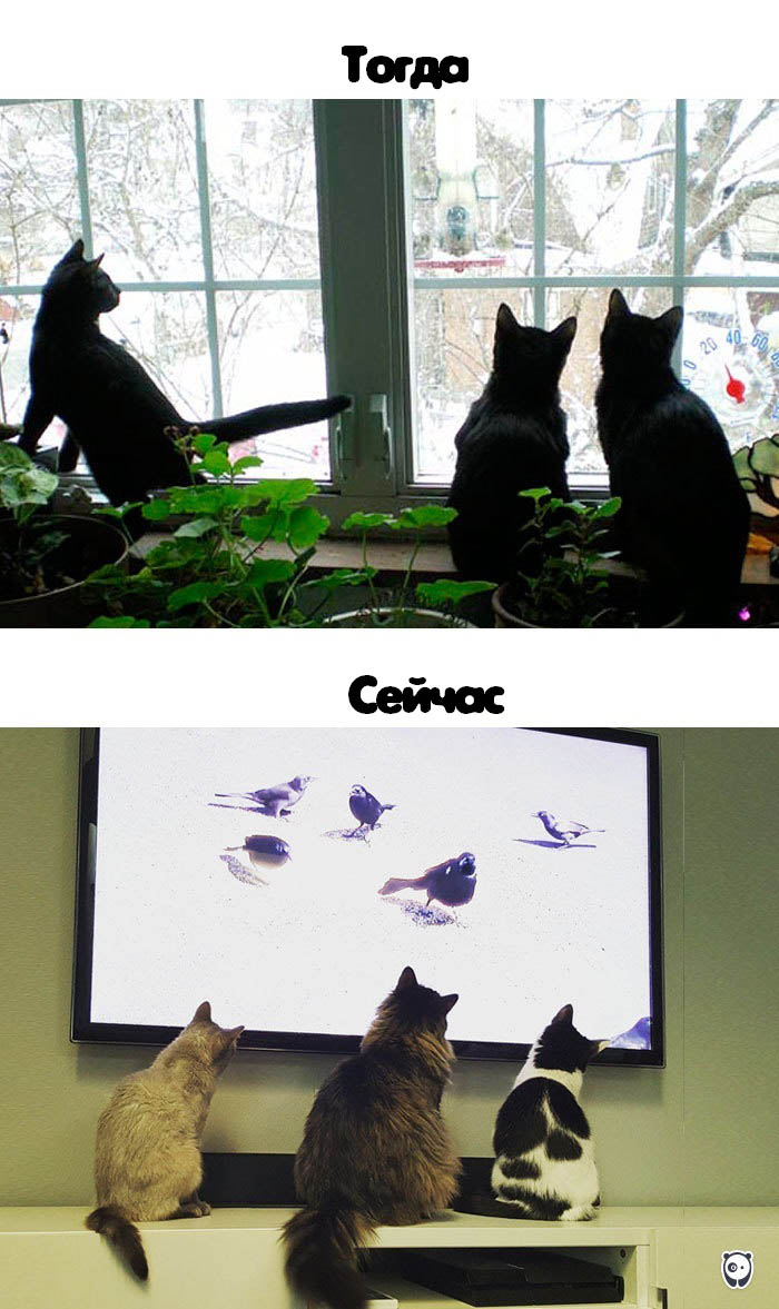 cats-then-now-funny-technology-change-life-vinegret (9)