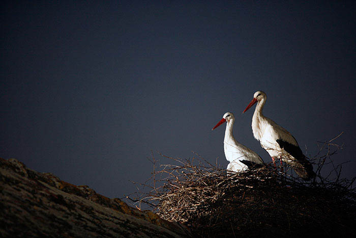 stork-flies-thousands-miles-friend-klepetan-malena-croatia-vinegret (4)