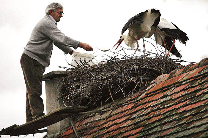 stork-flies-thousands-miles-friend-klepetan-malena-croatia-vinegret (6)