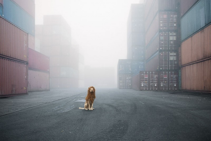 stray-dog-big-city-lion-grossstadtlowe-julia-marie-werner-vinegret (1)