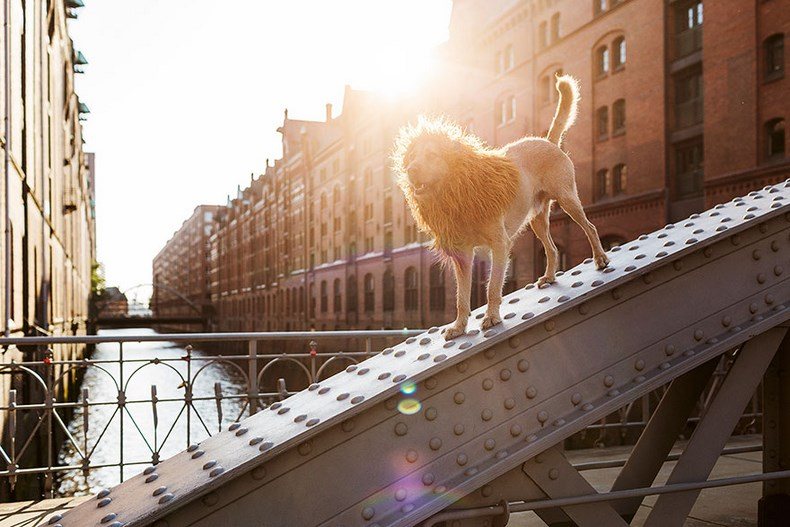 stray-dog-big-city-lion-grossstadtlowe-julia-marie-werner-vinegret (12)