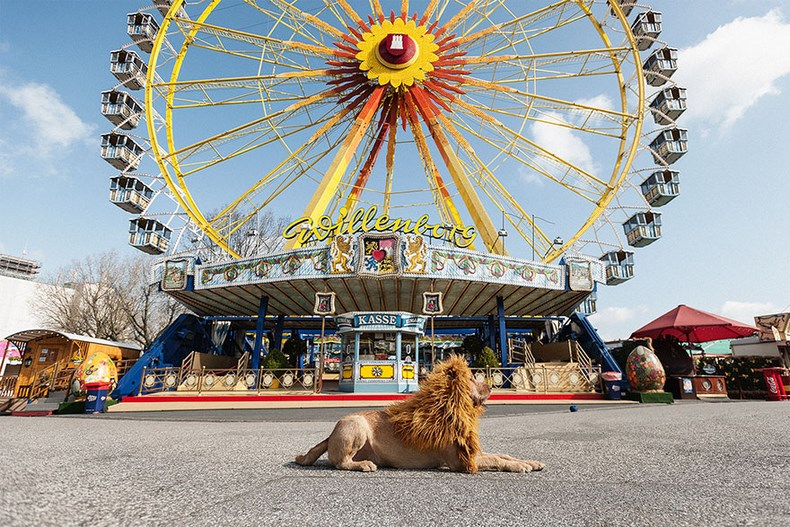 stray-dog-big-city-lion-grossstadtlowe-julia-marie-werner-vinegret (9)