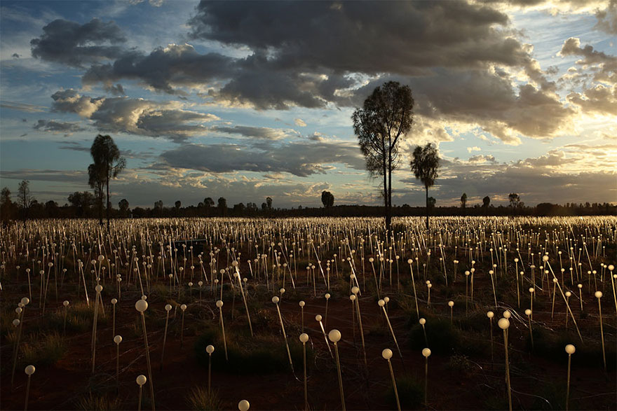 surreal-light-installations-field-of-light-bruce-munro-uluru-australia-vinegret (3)