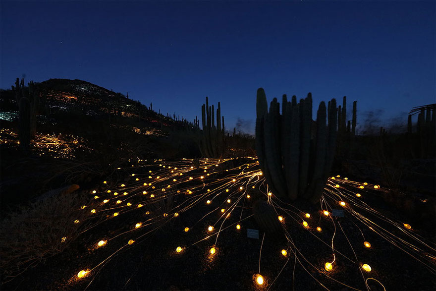surreal-light-installations-field-of-light-bruce-munro-uluru-australia-vinegret (4)