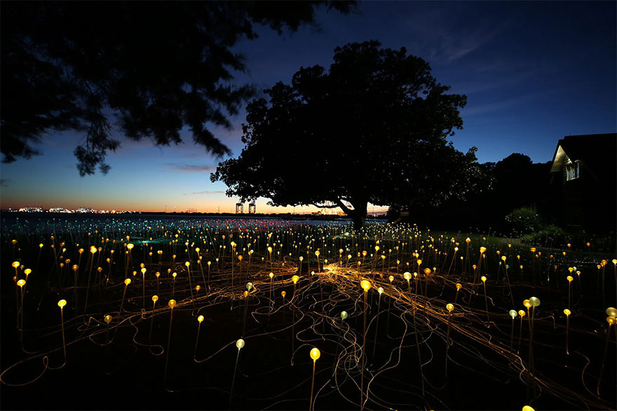 surreal-light-installations-field-of-light-bruce-munro-uluru-australia-vinegret (8)