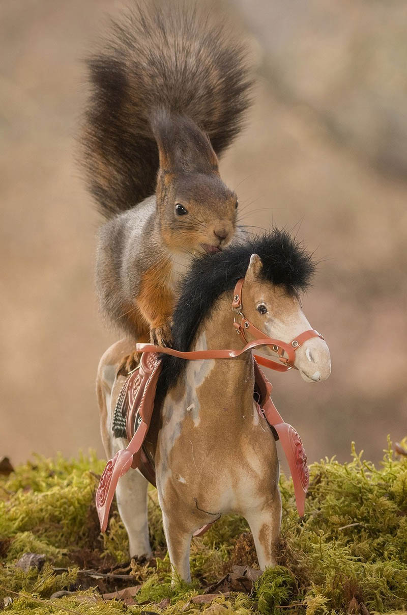 Adorable-squirrel-rider-Geert-Weggen-vinegret (1)