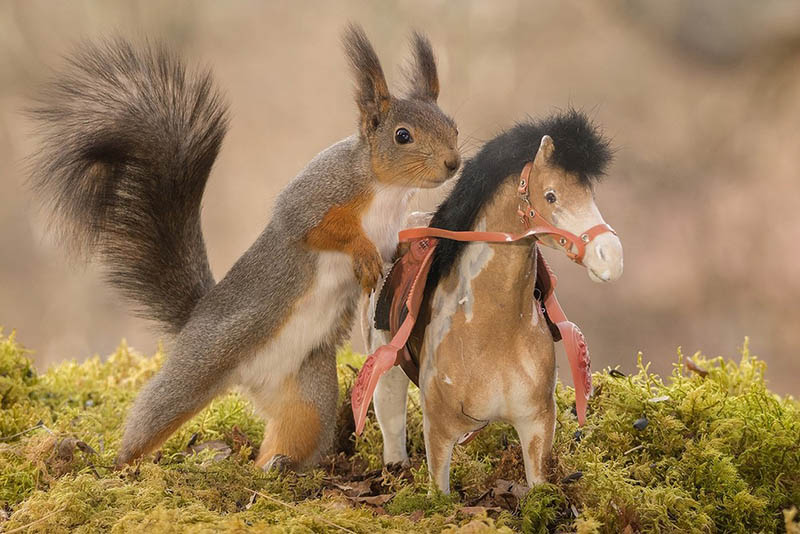 Adorable-squirrel-rider-Geert-Weggen-vinegret (2)