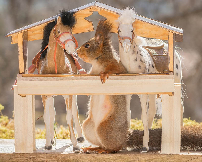 Adorable-squirrel-rider-Geert-Weggen-vinegret (3)