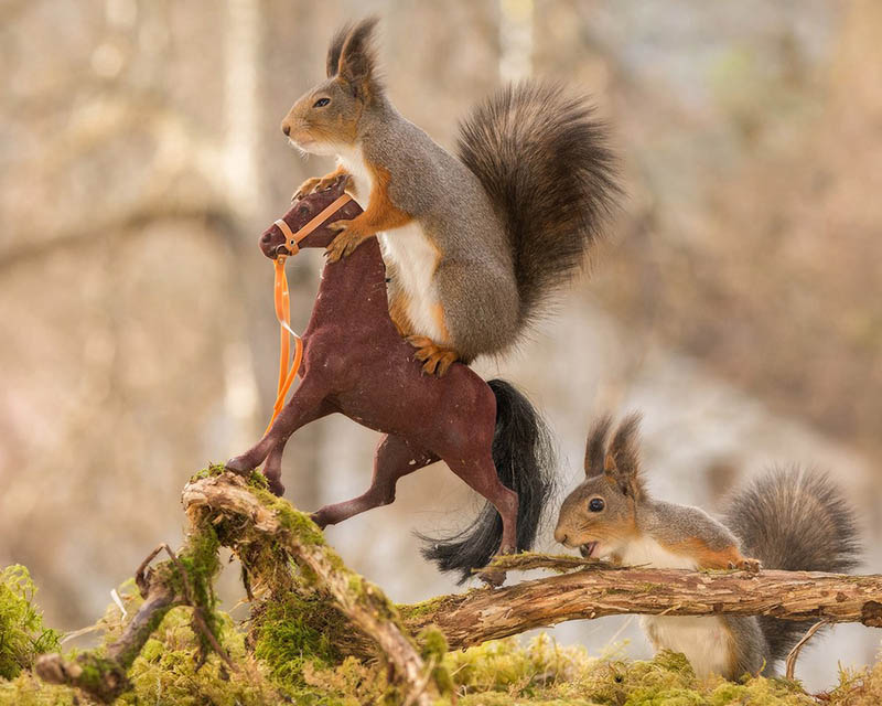 Adorable-squirrel-rider-Geert-Weggen-vinegret (4)