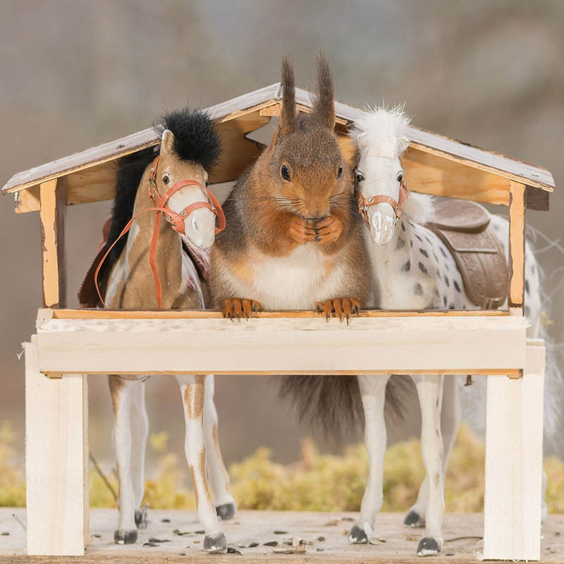 Adorable-squirrel-rider-Geert-Weggen-vinegret (6)