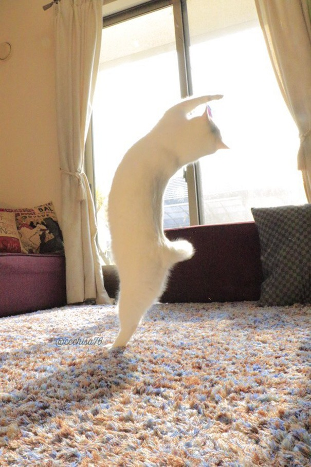 ballet-cat-japan-vinegret (1)