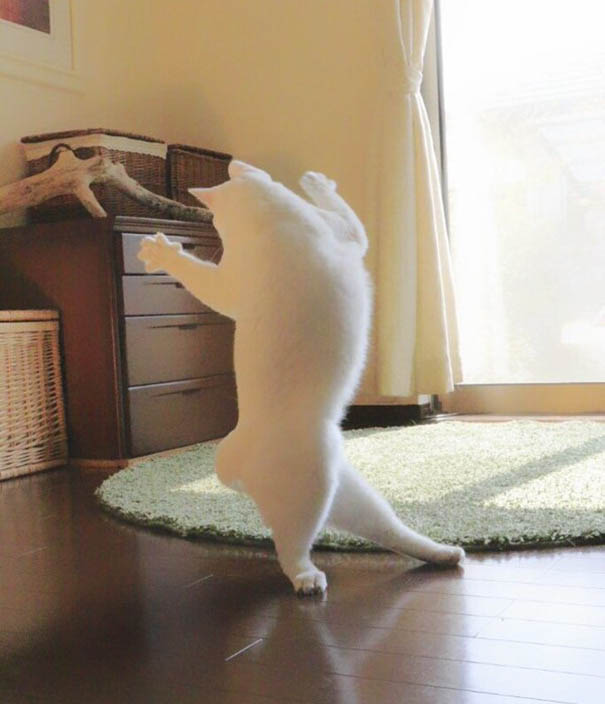 ballet-cat-japan-vinegret (5)