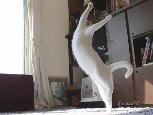 ballet-cat-japan-vinegret (6)