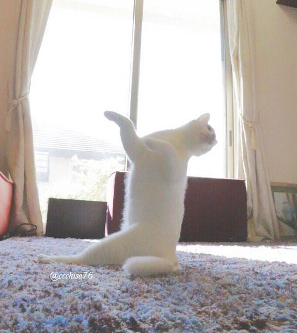 ballet-cat-japan-vinegret (7)