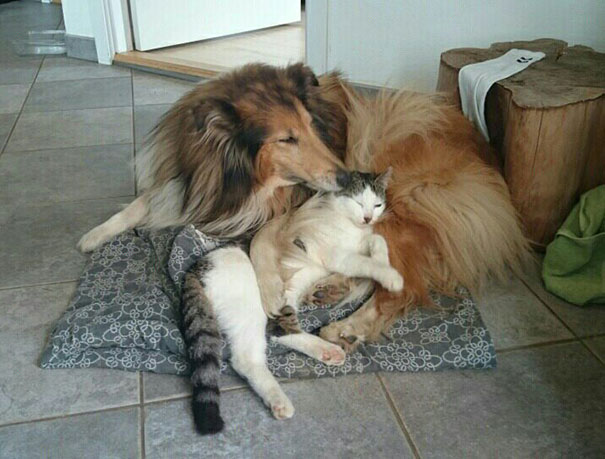 cat-dog-best-friends-molly-moses-vinegret (2)