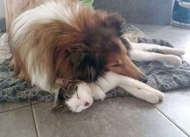 cat-dog-best-friends-molly-moses-vinegret (7)